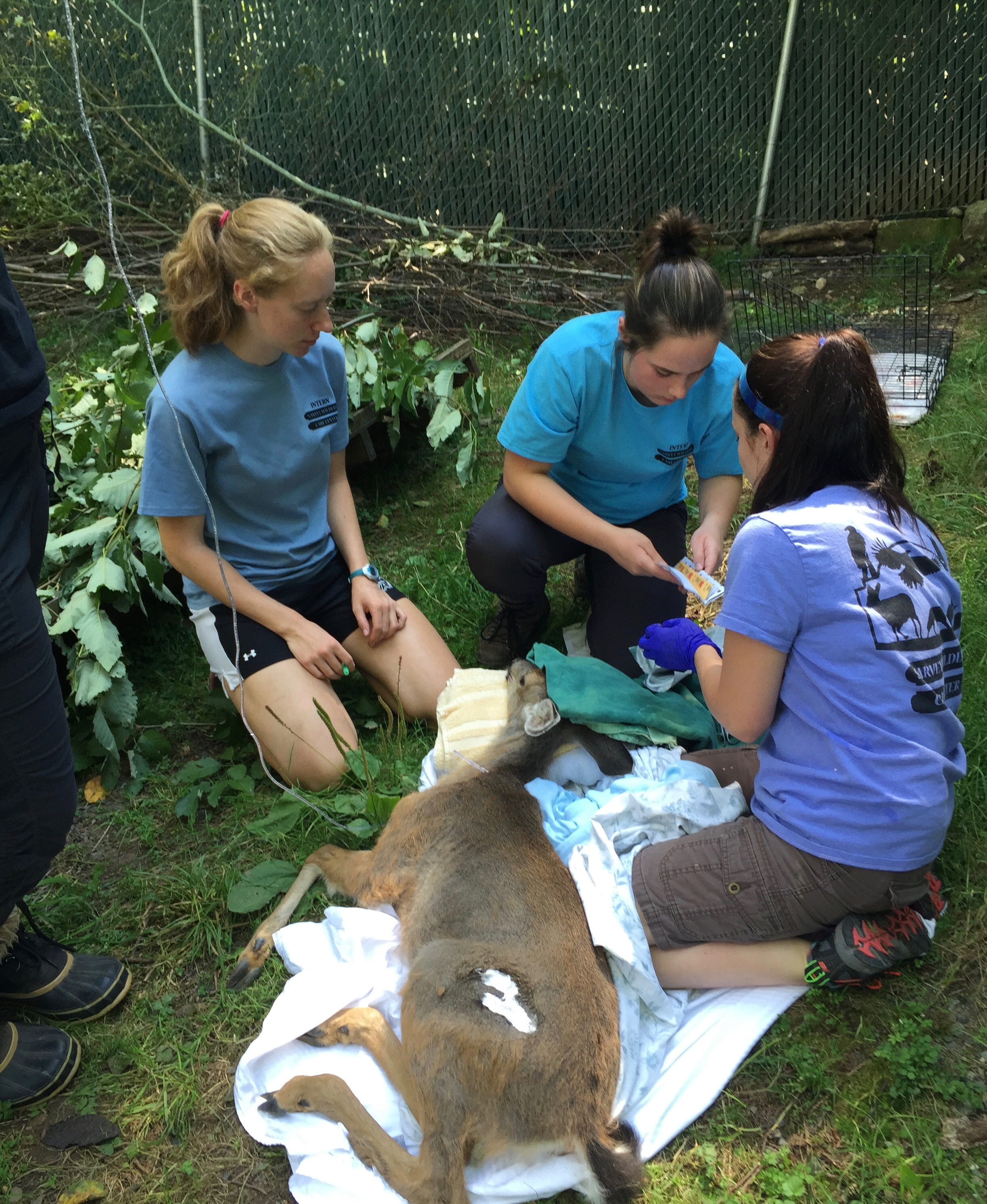 job description to assist licensed rehabilitators in the care and maintenance of sick injured and orphaned wildlife patients - Wildlife Biologist Job Description