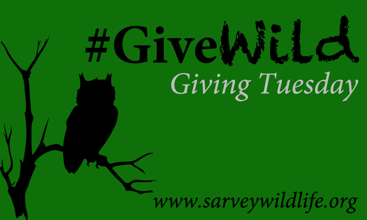 Giving Tuesday Give Wild